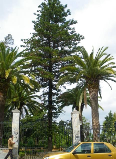 Jardines de Andalucía: Árbol Singular
